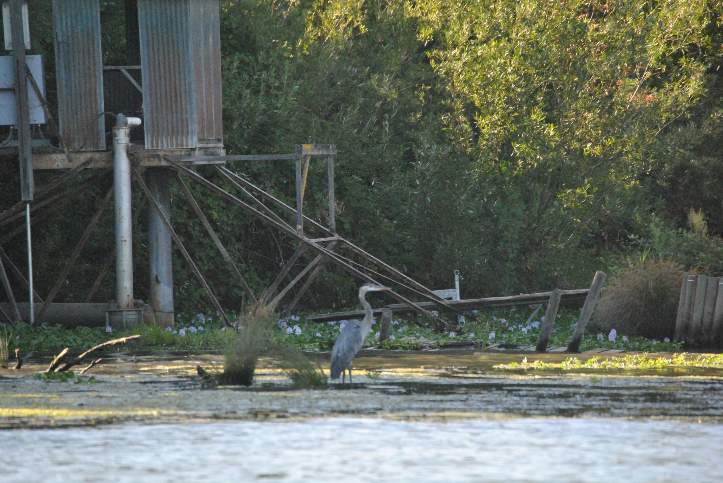 birdpumphouse2